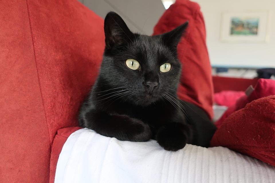 protéger son sofa des griffes du chat